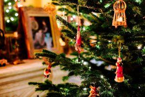pine-tree-usariusaricicla